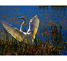 Wings In White Adorn Photographic Print