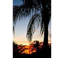 Palm Sunset Photographic Print