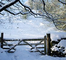 Old gate in the snow by Greg  Walker