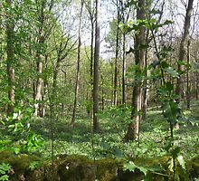 Woodland time by madeyemaddy