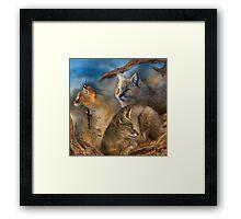 Wildcat Day Framed Print