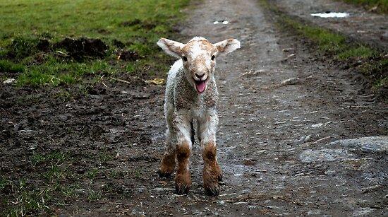 Baa Lamb by melek0197