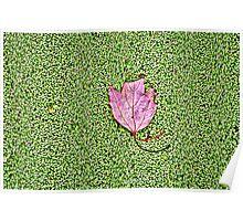 Maple Leaf (HDR) Poster
