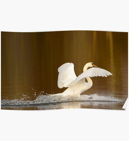 Swan Landing Poster