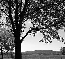 A Tree in Vermont by raineydaze