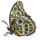 Butterfly 01 by Erin Quinn