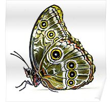 Butterfly 01 Poster