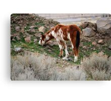 Spots,Reno Nevada USA Canvas Print