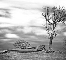 Fallen tree (black & white) by Lee Hopkins