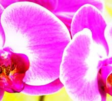 Bloomin Sticker