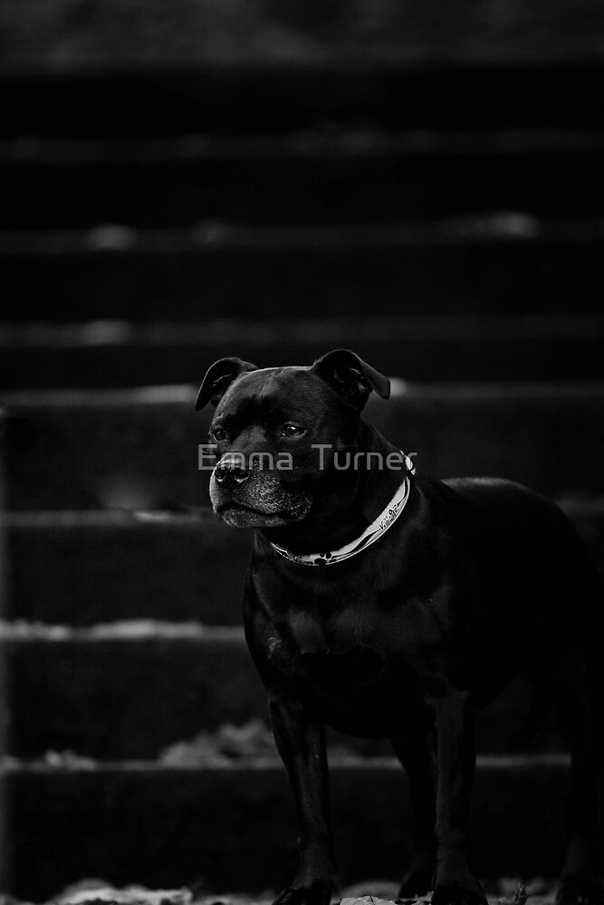 My Black Stafford Ruby by Emma  Turner