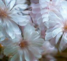 Magnolia Promenade by sundawg7