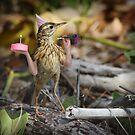 Cakebird by Felfriast