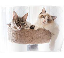 Cat Companions Poster