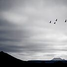 Geese Fly South for Winter by Silken Photography