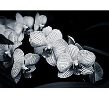 Orchids in Monochrome Photographic Print