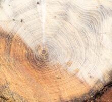 Top view of a fresh cut tree stump on the forest Sticker