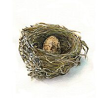 Wren Nest and egg Photographic Print