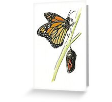 Monarch Butterfly with pupa Greeting Card