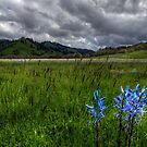 Wide Open Spaces by Charles & Patricia   Harkins ~ Picture Oregon