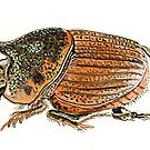 Dung Beetle by thedrawingroom