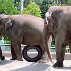 Elephant With A Spare Tire  by Jonathan  Green