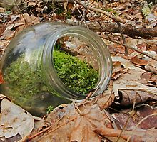 Nature's Terrarium by Lynn Gedeon