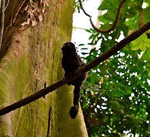 Monkey by K. Abraham