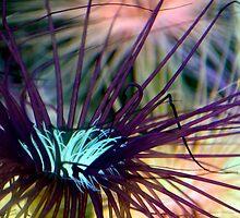 Sea Life by K. Abraham