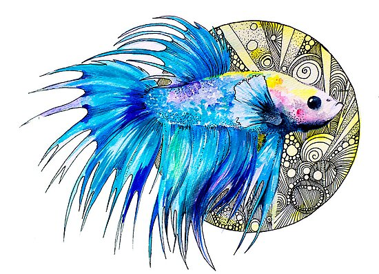 Betta by Slaveika Aladjova