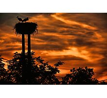 Stork at sunset Photographic Print
