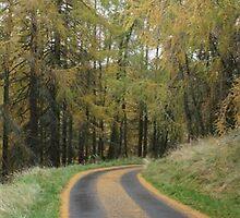 Autumn Drive by Caroline Mackay