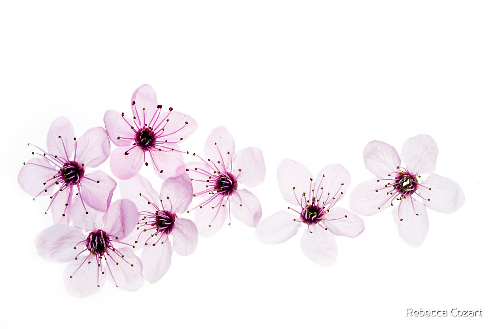 Happy Spring by Rebecca Cozart