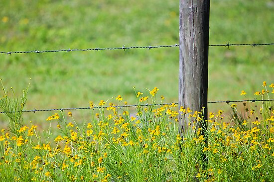 Wildflowers and Barbed Wire Fence by Steve Case