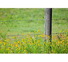 Wildflowers and Barbed Wire Fence Photographic Print