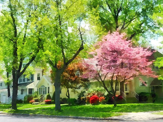 The Trees Are Flowering On My Street by Susan Savad