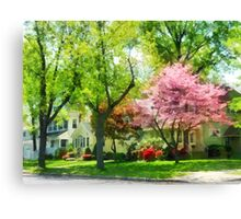 The Trees Are Flowering On My Street Canvas Print