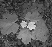 two tone leaf by Miguel1995