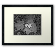 two tone leaf Framed Print