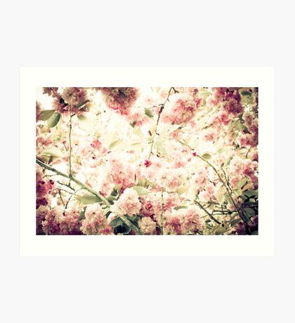 Kwanzan Cherry Tree Blossom Art Print