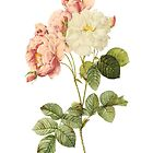 Peony Floral Ipod or Iphone Case by Elizabeth Coats