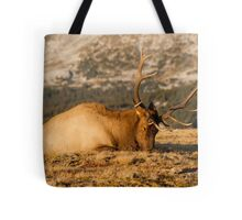 Catching The Evening Rays Tote Bag