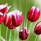 *Spring Tulips Mosaic* by DeeZ (D L Honeycutt)
