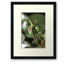 Taking in the Sun Framed Print