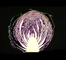 Purple Cabbage by Otto Danby II