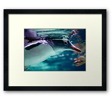 Penguin 3 Framed Print