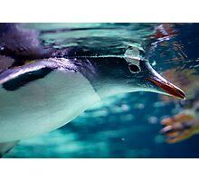 Penguin 3 Photographic Print