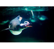 Penguin 4 Photographic Print