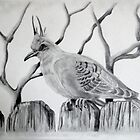'Top Crested Pigeon' by jansimpressions