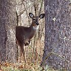 Doe  by Thomas Young